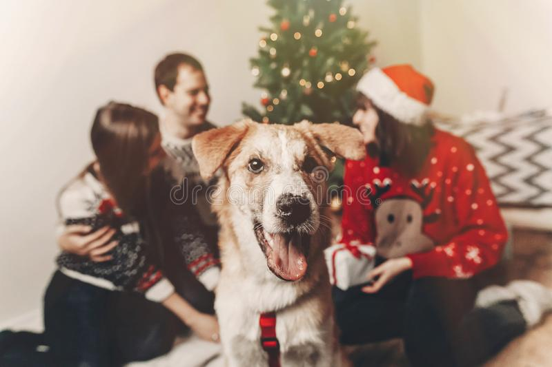 Happy family in stylish sweaters and cute funny dog celebrating royalty free stock photography