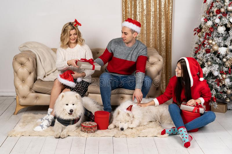 Happy family in stylish sweaters and cute funny dogs at christmas tree with ligths. Happy family in stylish sweaters and cute funny dogs exchanging gifts at royalty free stock image