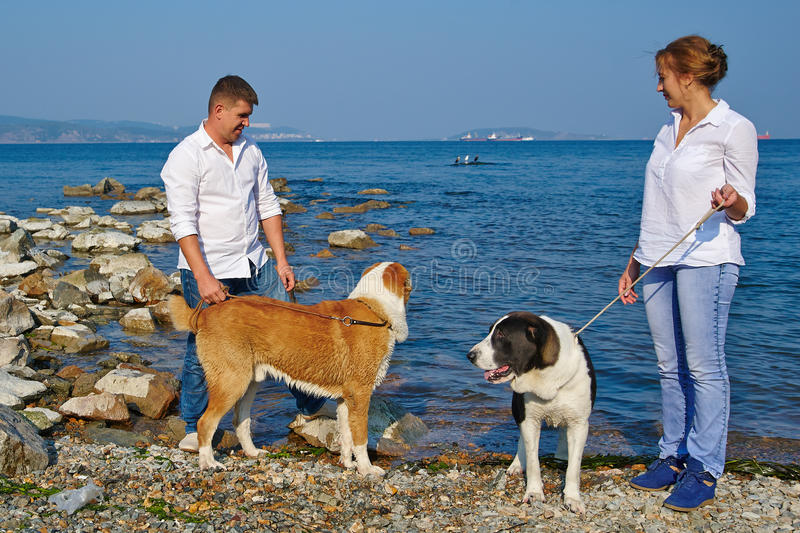 Happy family walks with two large dogs on the beach royalty free stock images