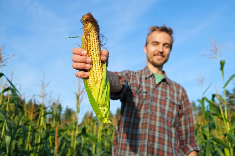 Happy farmer with fresh corncob on corn field. Harvest season. Handsome smiling man agronomist showing ripe maize to camera royalty free stock photo