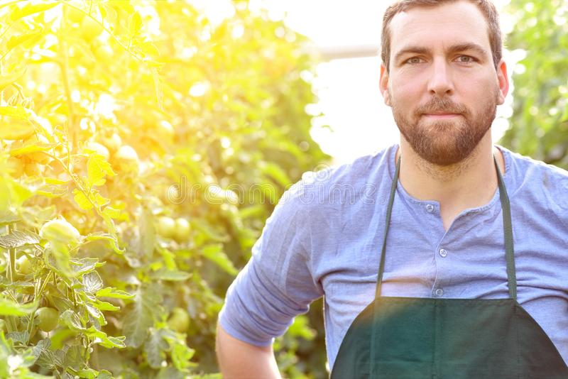 Happy farmer growing and harvesting vegetables on the farm royalty free stock photos