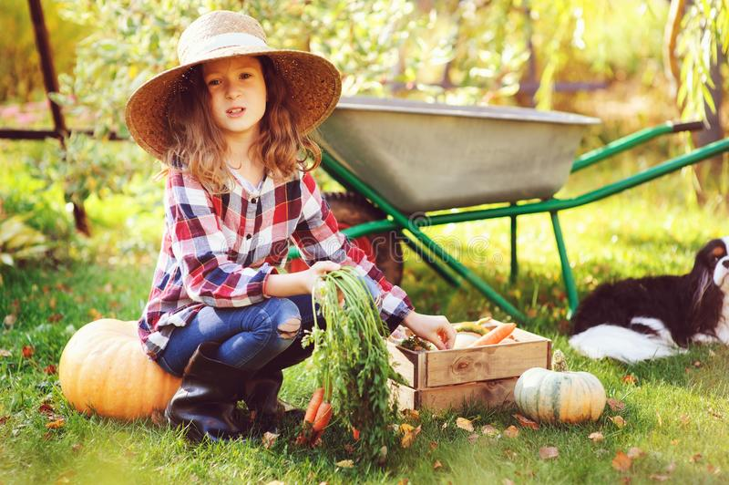Happy child girl with spaniel dog playing little farmer in autumn garden and picking vegetable harvest royalty free stock image