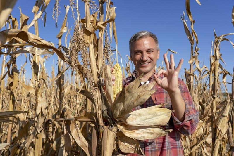 Happy Farmer met Ripe Corncob die oké hand-bord toont stock fotografie