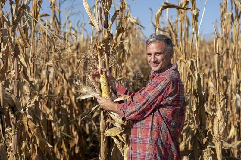 Happy Farmer met Ripe Corncob die op camera kijkt royalty-vrije stock fotografie