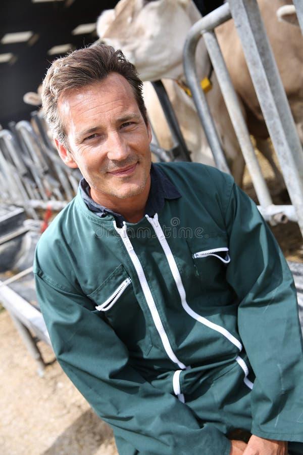 Happy farmer sitting in barn stock images