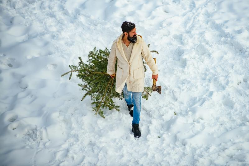 Happy father with Christmas tree on a snowy winter walk. Bearded man with freshly cut down Christmas tree in forest. royalty free stock photography