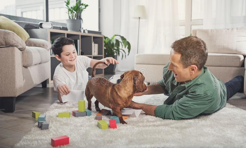 Happy father and son playing with dog at home stock image
