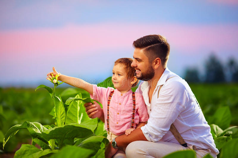 Happy father and son on their tobacco plantation, at sunset royalty free stock image