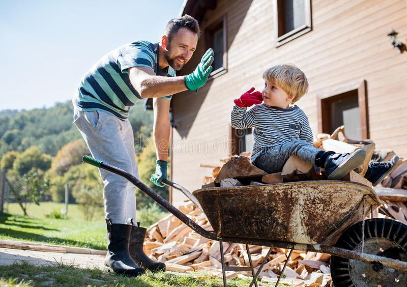 A father and toddler boy outdoors in summer, putting firewood in wheelbarrow. stock images