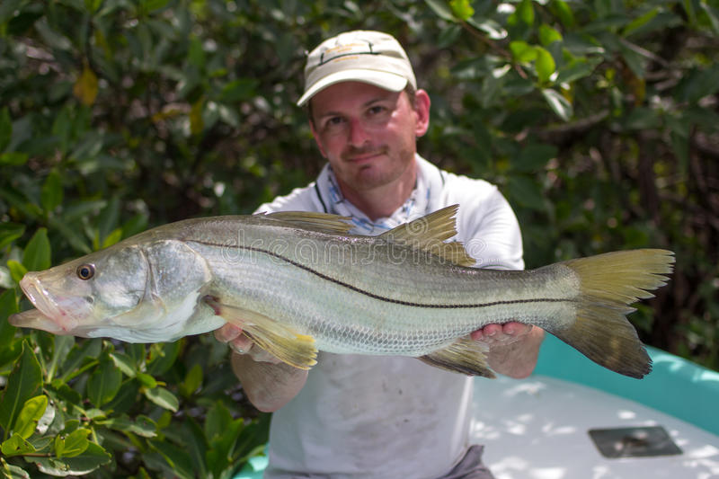 Happy Fisherman holding a good size Snook. A man holding a Snook fish caught with lure, somewhere on the flats of Belize next too a mangrove. This fish is known royalty free stock photos