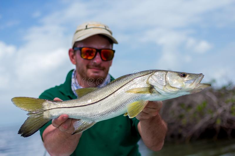 Happy Fisherman holding a nice fresh Snook. A man holding a Snook fish caught with lure, somewhere on the flats of Belize next too a mangrove. This fish is known royalty free stock photo