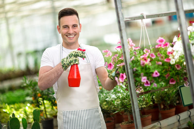 Happy florest watering flower in glasshouse. Happy Male florest watering flower in glasshouse stock photo