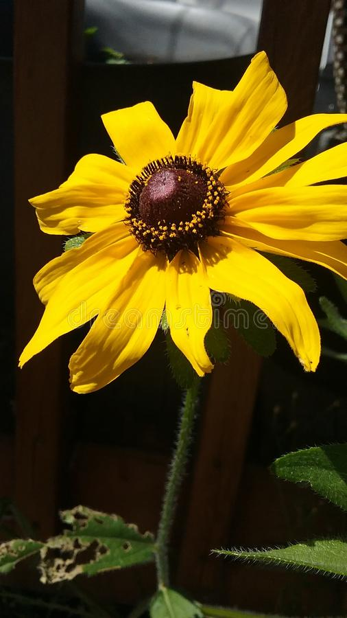 Happy Flower in the Sun stock photography
