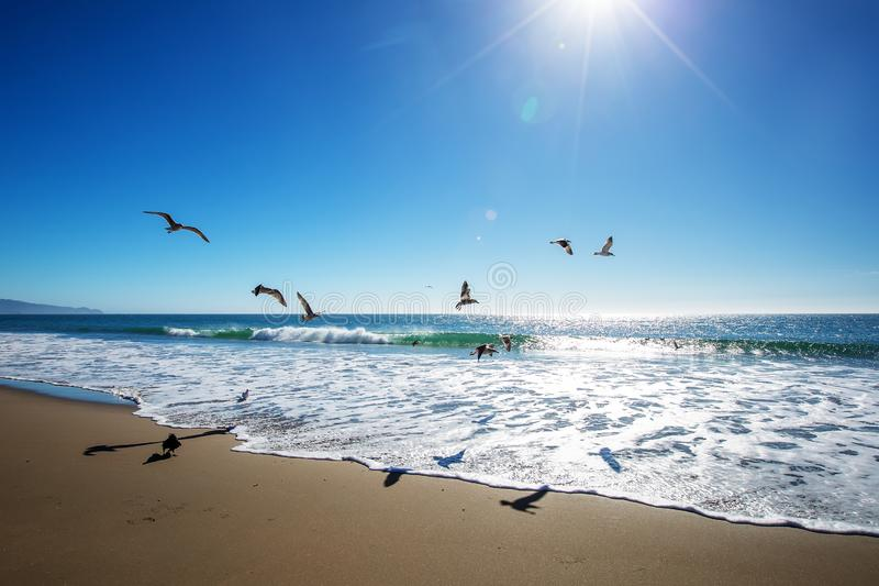 Beautiful view of the ocean with seagulls.  stock photo
