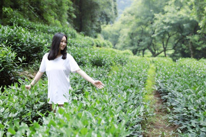 A happy free smile peace balance meditation beauty girl Asian Chinese travel hiking smell maple stand by a lake bag hangzhou xihu. A beautiful Asian Chinese girl royalty free stock photo