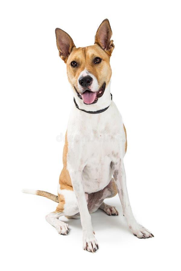 Happy Friendly Large Mixed Breed Dog stock image