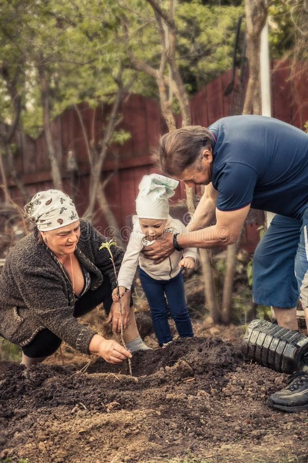 Happy gardener grandparents grandchild together planting tree grandparenting save trees environmental conservation concept royalty free stock images