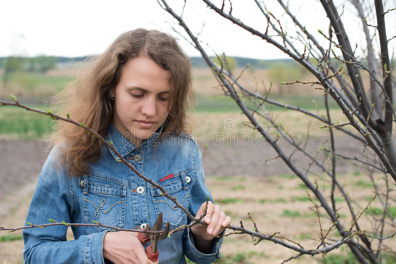 Happy gardener woman using pruning scissors in orchard garden. Pretty female worker portrait. With pruners royalty free stock images