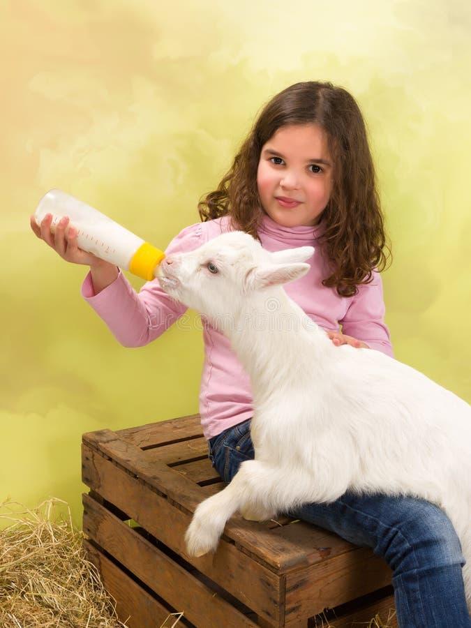 Happy girl feeding baby goat stock image