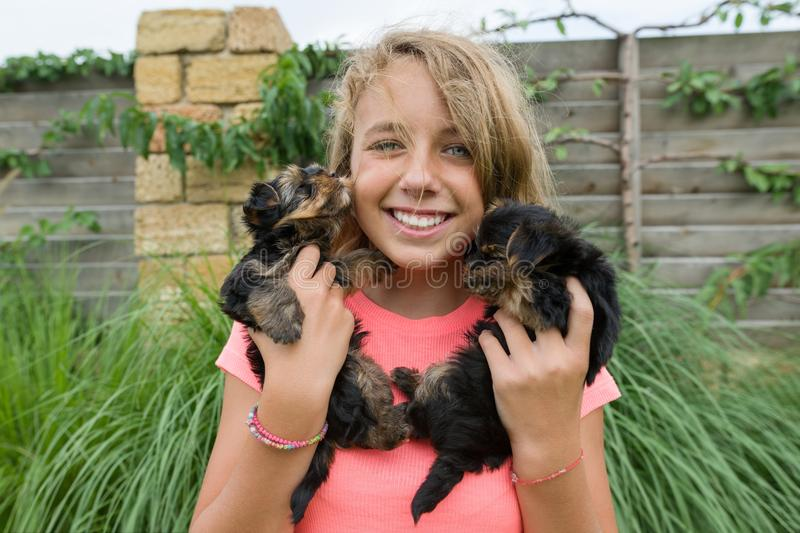 Happy girl holding two yorkshire terrier puppies on her hands, summer nature background, green lawn. royalty free stock photos