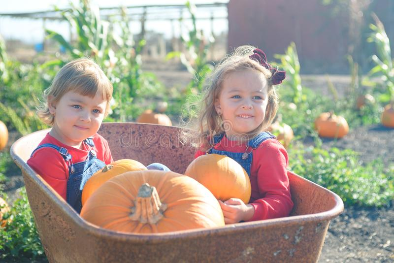 Happy girls sitting inside wheelbarrow at field pumpkin patch. Little sisters in jeans overalls sitting inside old wheelbarrow at farm field pumpkin patch stock photo