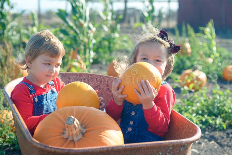 Happy girls sitting inside wheelbarrow at field pumpkin patch. Little sisters in jeans overalls sitting inside old wheelbarrow at farm field pumpkin patch royalty free stock photography