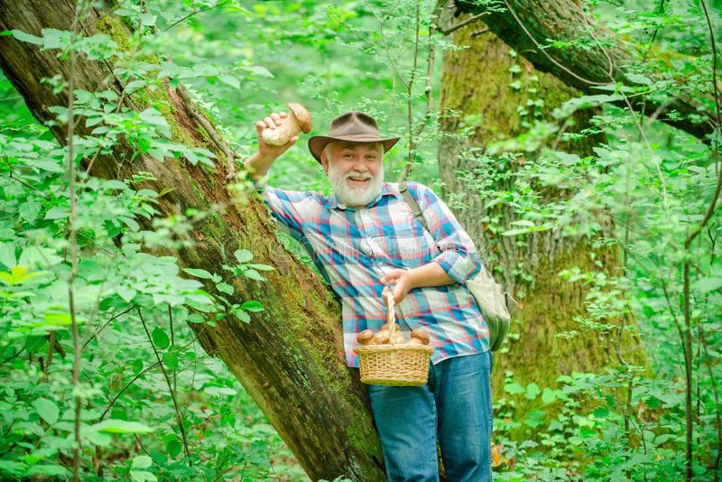 Happy Grandfather with mushrooms in busket hunting mushroom. Mushrooming in nature. Happy Grandfather with mushrooms in busket hunting mushroom. Mushrooming in royalty free stock photography