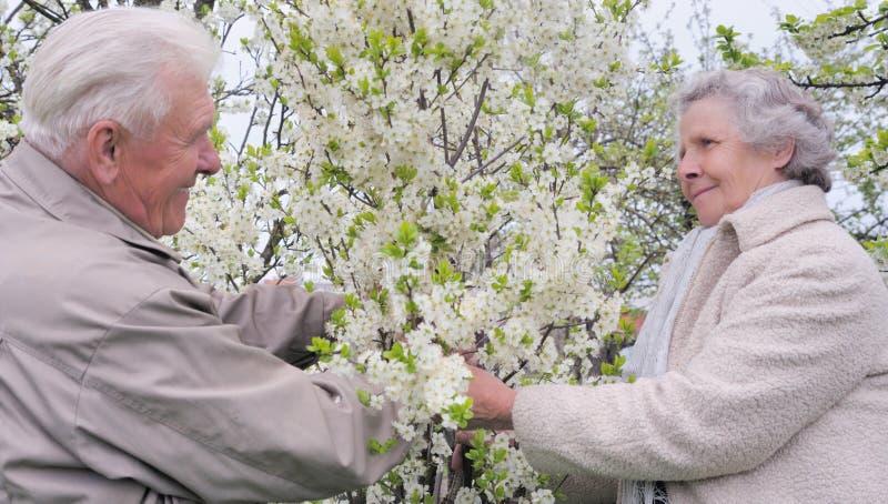 Happy grandparents in flowering garden stock photo