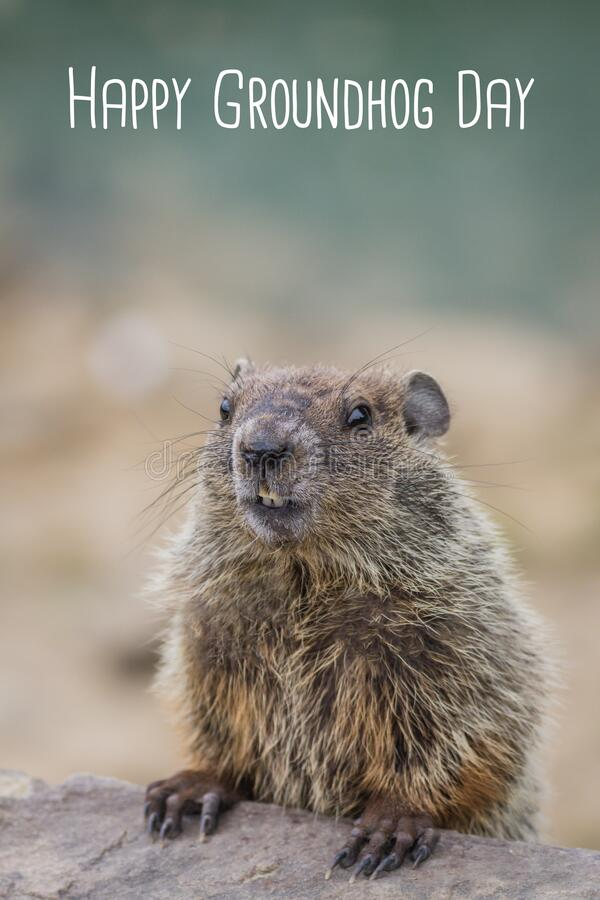 Free Happy Groundhog Day White Text With Adorable Groundhog Royalty Free Stock Image - 206703376