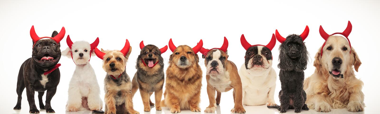 Happy group of dogs celebrating halloween stock images