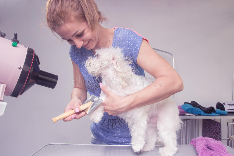 Happy hairdresser combing dog hair fur royalty free stock photo