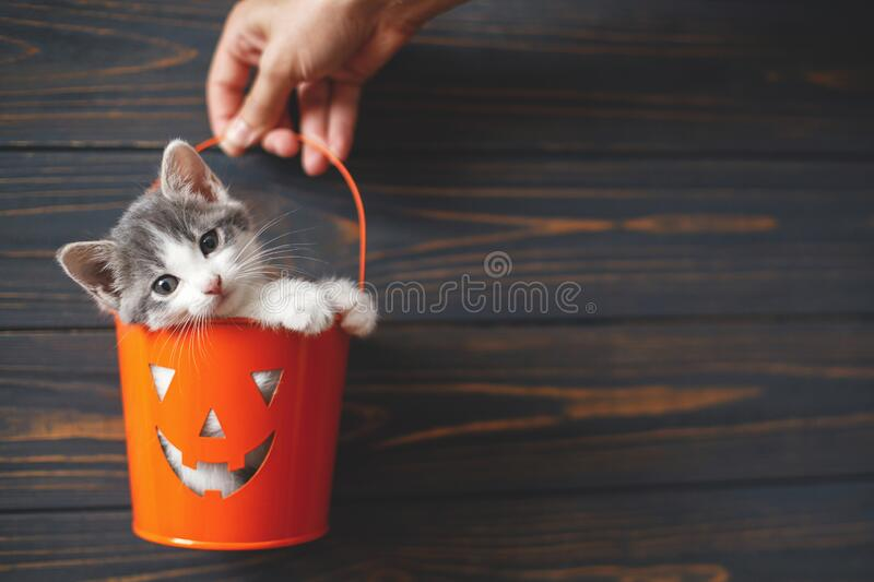 68 129 Cute Kitten Black Background Photos Free Royalty Free Stock Photos From Dreamstime