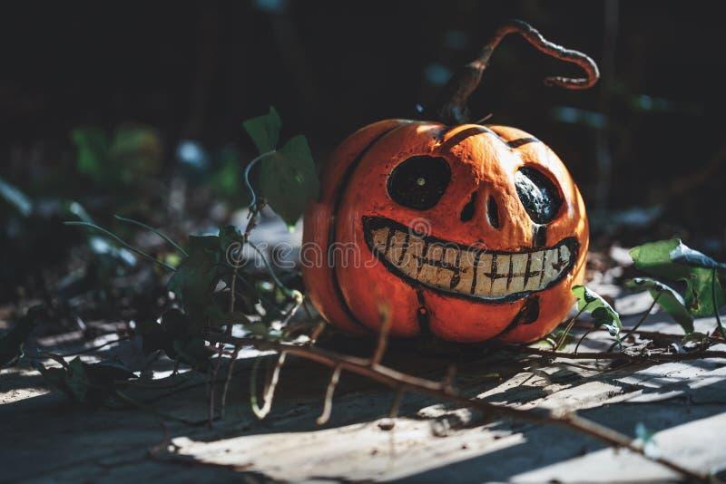 Happy Halloween! pumpkin in dark forest stock photography