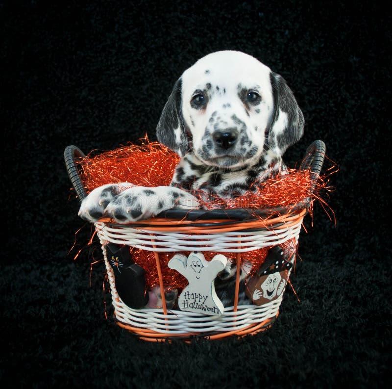 Happy Halloween Puppy stock photo
