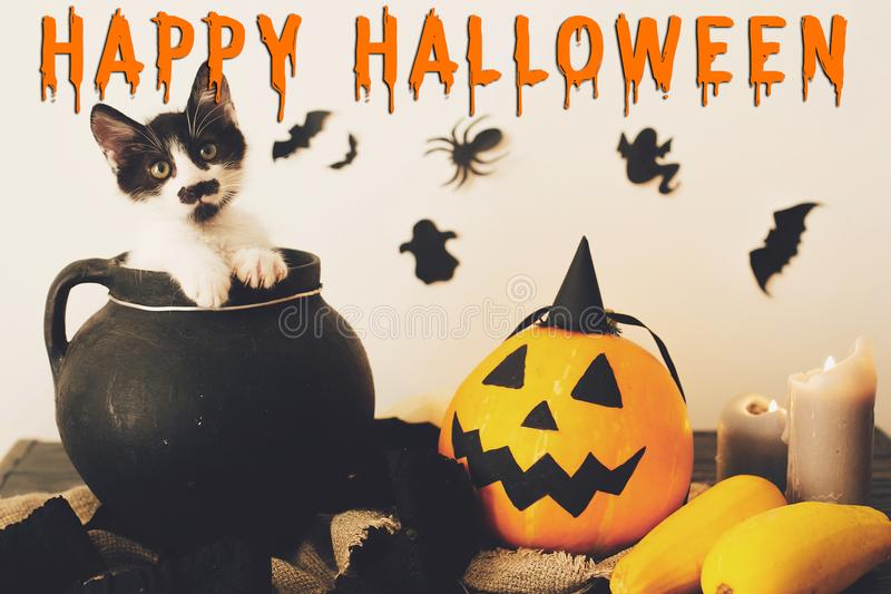 Happy Halloween text concept. Seasons greeting, spooky Halloween. Sign. Cute kitty in witch cauldron with Jack o lantern, pumpkin,candles, broom and bats royalty free stock photo