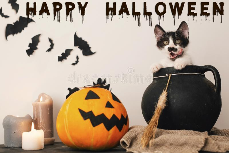 Happy Halloween text concept. Seasons greeting, spooky Halloween. Sign. Cute kitty in witch cauldron with Jack o lantern, pumpkin,candles, broom and bats royalty free stock image