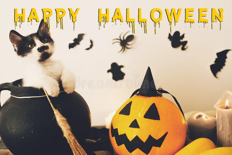 Happy Halloween text concept. Seasons greeting, spooky Halloween. Sign. Cute kitty in witch cauldron with Jack o lantern, pumpkin,candles, broom and bats royalty free stock photos
