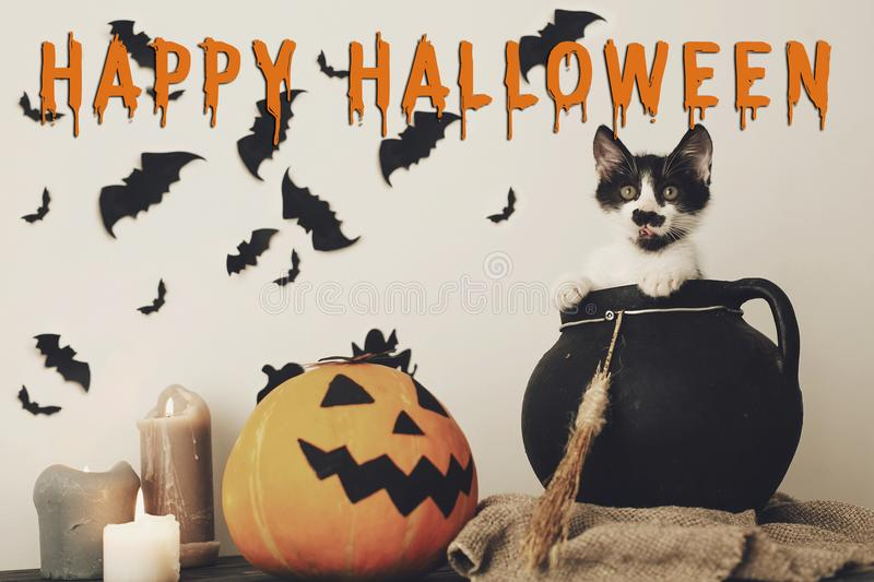 Happy Halloween text concept. Seasons greeting, spooky Halloween. Sign. Cute kitty in witch cauldron with Jack o lantern, pumpkin,candles, broom and bats royalty free stock photography