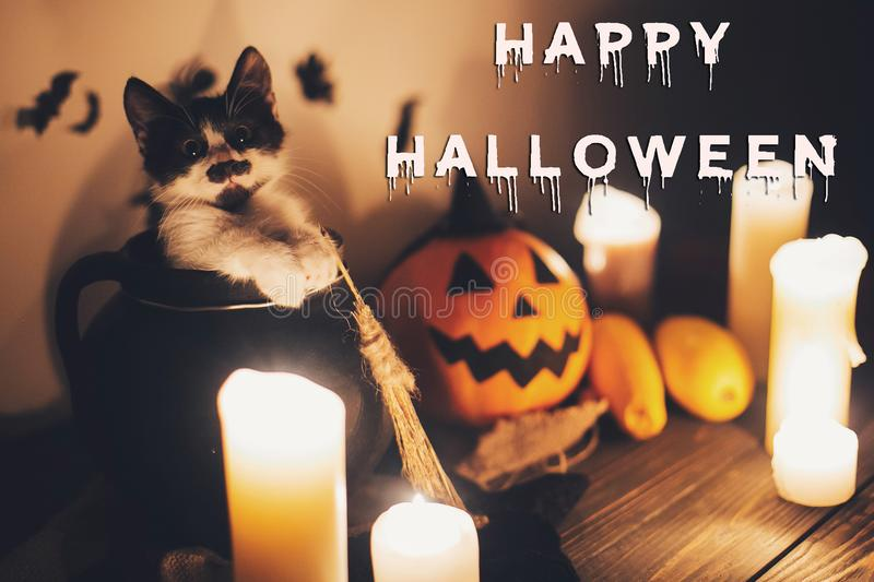 Happy Halloween text concept. Seasons greeting, spooky Halloween. Sign. Cute kitty in witch cauldron with Jack o lantern, pumpkin, candles, broom and bats royalty free stock photos