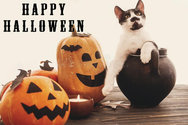 Happy Halloween text sign on pumpkins, jack-o-lantern, cat in wi. Tch cauldron, bats, spider, candle, autumn leaves on black wood in light. Halloween decoration royalty free stock images