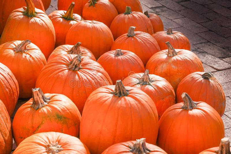 Happy Halloween or Thanksgiving card background - pile of large orange pumpkins. Decorative wallpaper. Happy Halloween or Thanksgiving card background - pile of stock images