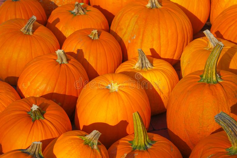 Happy Halloween or Thanksgiving card background - pile of large orange pumpkins. Decorative wallpaper. Happy Halloween or Thanksgiving card background - pile of stock photo