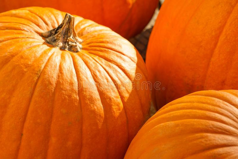 Happy Halloween or Thanksgiving card background - pile of large orange pumpkins. Plants decorative wallpaper. Happy Halloween or Thanksgiving card background stock image