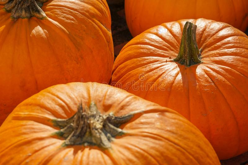Happy Halloween or Thanksgiving card background - pile of large orange pumpkins. Decorative wallpaper. Happy Halloween or Thanksgiving card background - pile of royalty free stock image