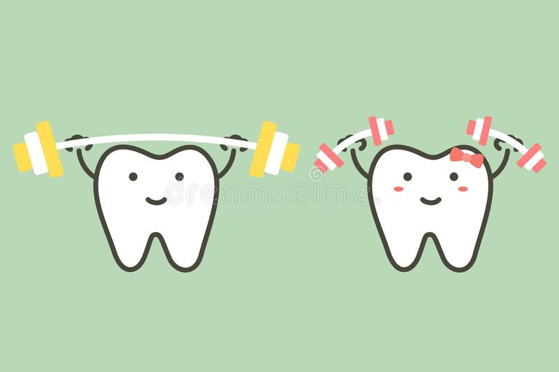 Happy healthy white teeth are weightlifting - strong tooth. Happy healthy white teeth are weightlifting, strong tooth - dental cartoon vector flat style cute vector illustration