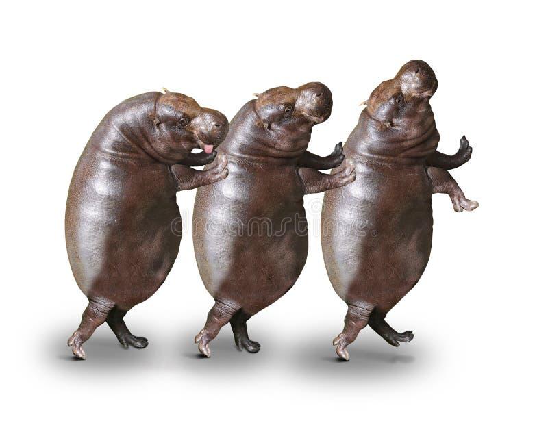 Happy Hippos. royalty free stock photos