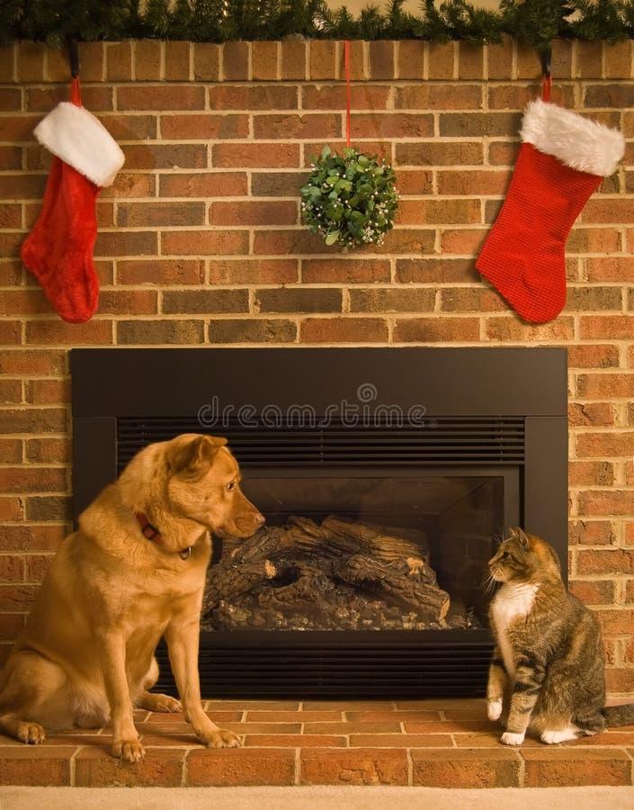 Download Happy Holidays stock photo. Image of feline, season, mistletoe - 3815272