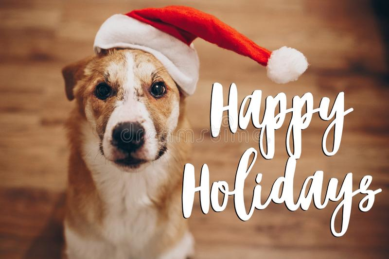 Happy holidays text, seasonal greetings card sign. dog in santa stock photos