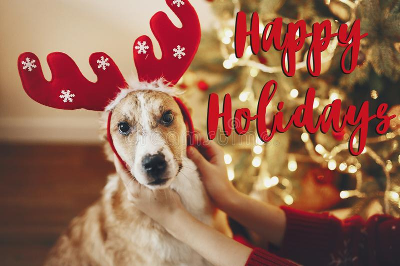 Happy holidays text, seasons greetings, merry christmas and happy new year concept. cute dog in reindeer hat sitting at christmas. Tree. funny moment.. xmas stock photography