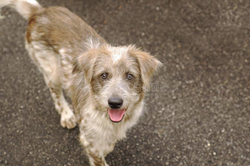 Happy Homeless Dog stock photos